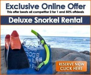 Reserve Maui Snorkeling Gear
