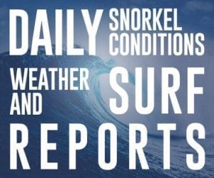 Maui Daily Snorkel Conditions Weather and Surf Reports