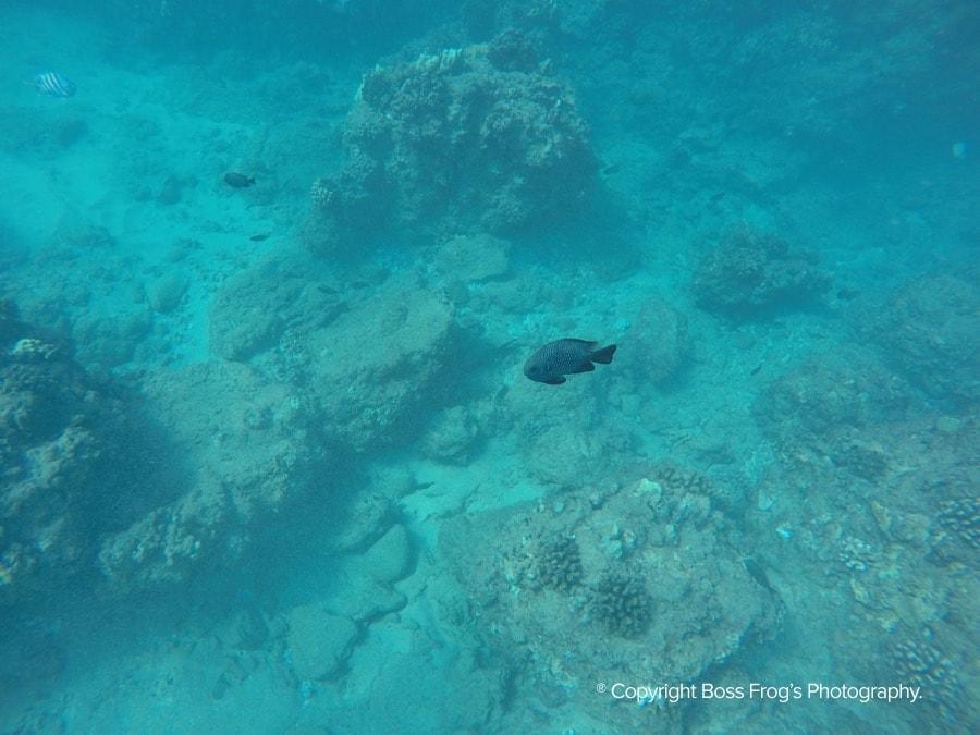 Kaanapali Black Rock Snorkeling