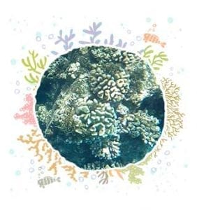 Cauliflower Coral