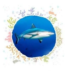 GrayReef Shark