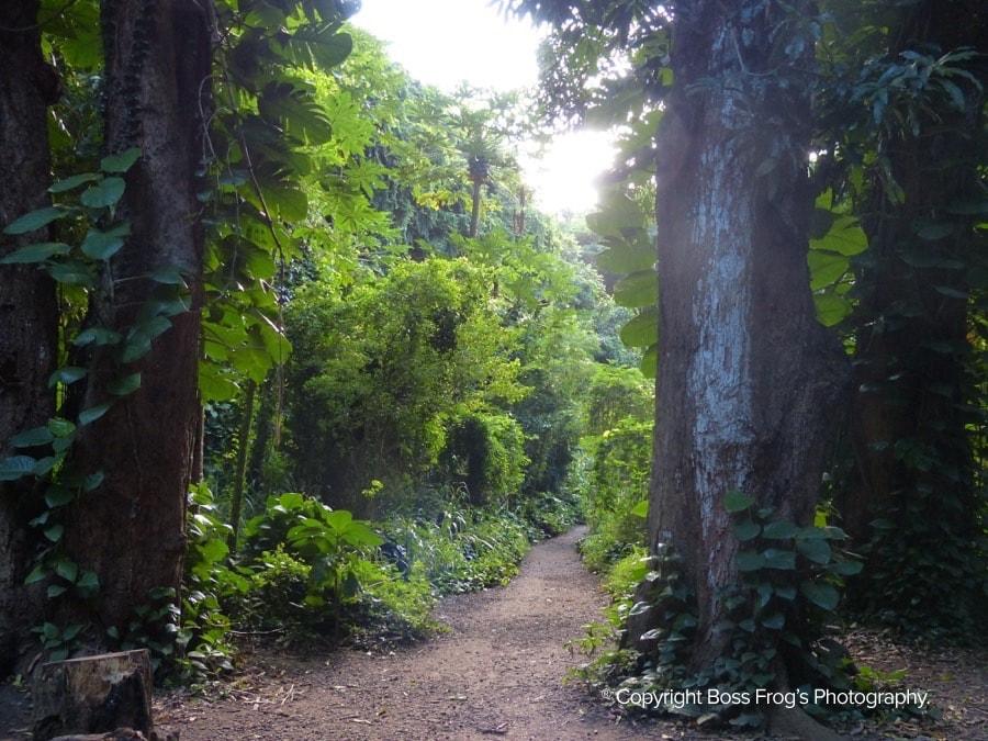 Honolua Bay Maui Path