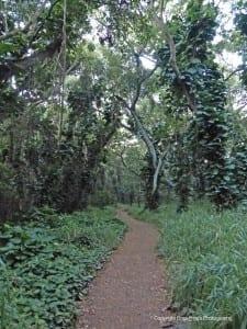 Honolua Bay Maui Trail