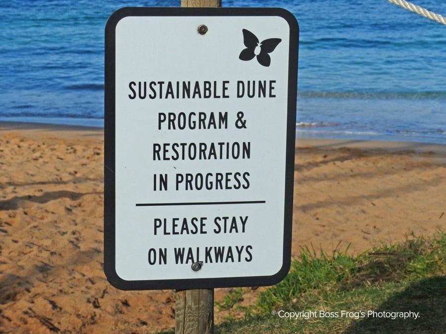 Kapalua Bay Maui Hawaii - Sustainable dune