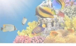 Maui Fish ID Chart