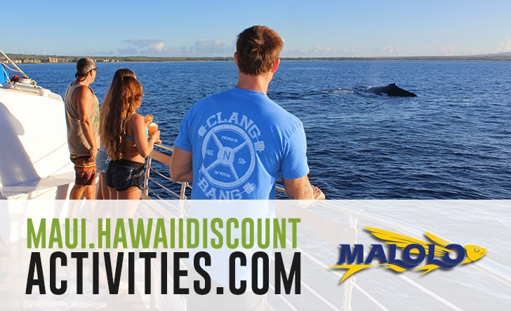 Malolo Whale Watching Travel Tips - Boss Frog's