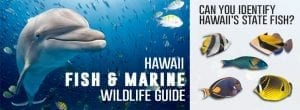 hawaii fish and wildlife guide
