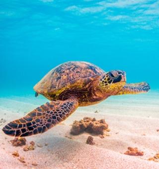 Hawaii Fish Marine Wildlife Information Maui Kauai Big Island