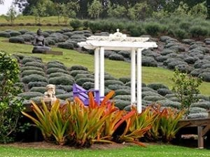 Kula Lavender Farm