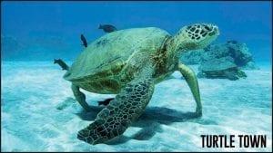 Turtle Town Snorkel Spot Maui