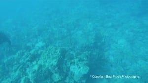 Five Caves Maui Hawaii Snorkeling