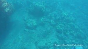 Five Caves Maui Hawaii - Snorkeling