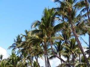 Keawakapu Beach Palm Trees