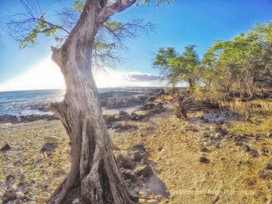 Maui Beach Guide - La Perouse Bay