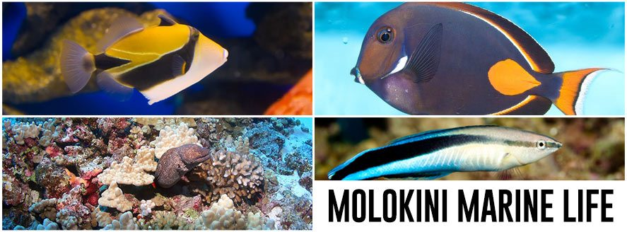 Molokini Marine Life