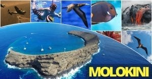 Molokini Facebook Graphic
