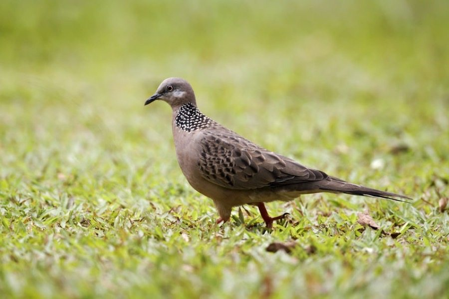 Maui Bird Guide - Maui Adventure Guide by Boss Frog's