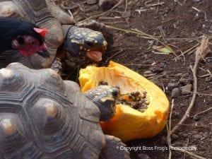 Lahaina Animal Farm - feeding turtle