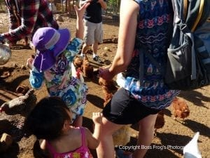 Lahaina Animal Farm