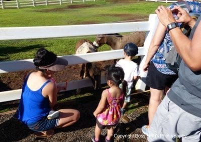 lahaina_animal_farm_6