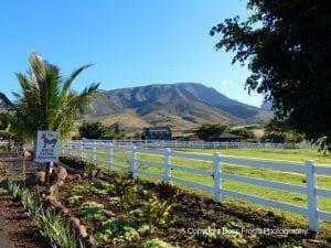 Lahaina Animal Farm - view of mountains