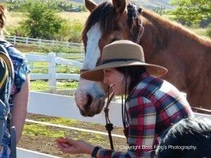 Lahaina Animal Farm - feeding horse