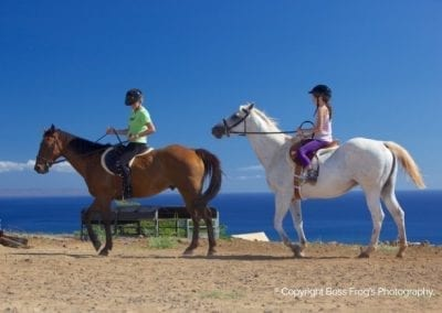 Lahaina Stables