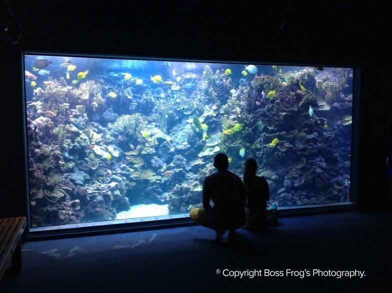 Check out Hawaiian Sea Life in the Underwater World of Maui's Ocean Center