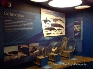 Cetaceans of Hawaii - Maui Ocean Center