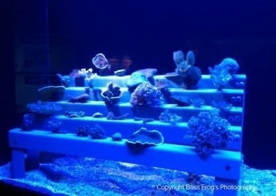 One of MOC's Extensive Coral Collections - Maui Ocean Center