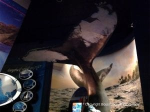 Replica of a Humbpack Whale Tail - Wow! - Maui Ocean Center