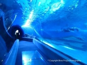 The Fish Tunnel! - Maui Ocean Center
