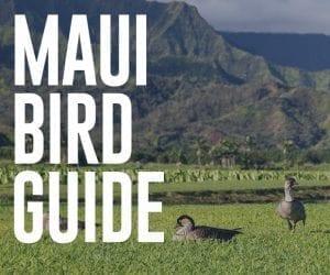 Maui Bird guide
