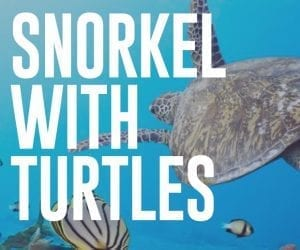 Snorkel With Turtles in Maui with Boss Frog's