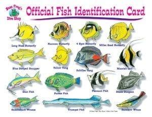 Kauai Fish ID Chart