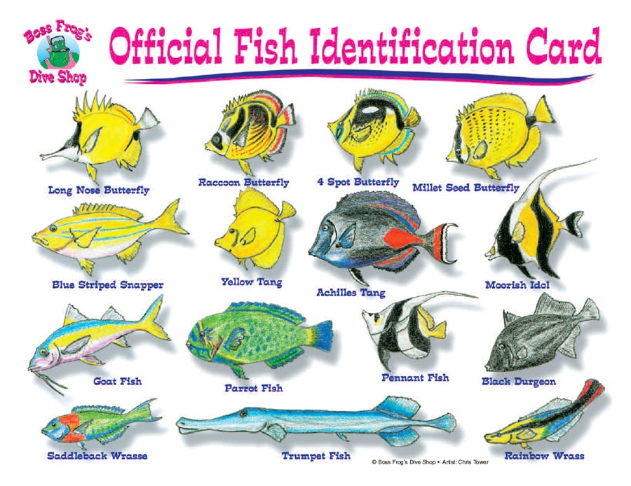 Kauai reef fish guide | Scuba | Pinterest | Hawaii, Scubas ...