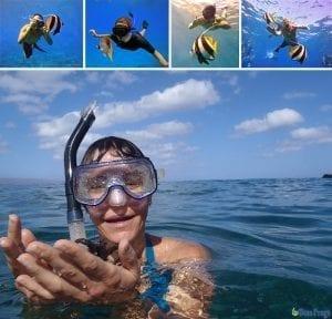 Maui snorkeling tips