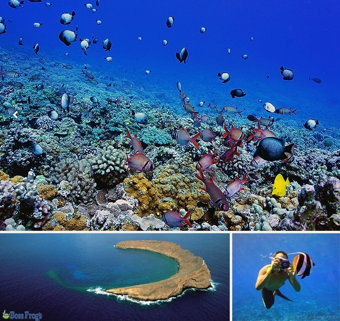 Underwater view and view from above while snorkeling at Molokini Crater
