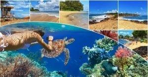 Kauai's 7 Best Snorkel Spots