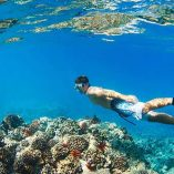 Malolo Snorkel Cruise - Free with 3-day or more snorkel rental