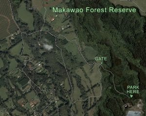 Makawao Forest Reserve Trail by Boss Frog's