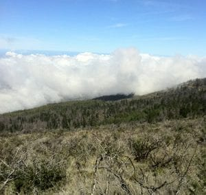A great view from the Haleakala Skyline Mountain Bike Trail.