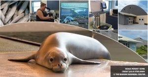 Hawaiian Monk Seal Hospital