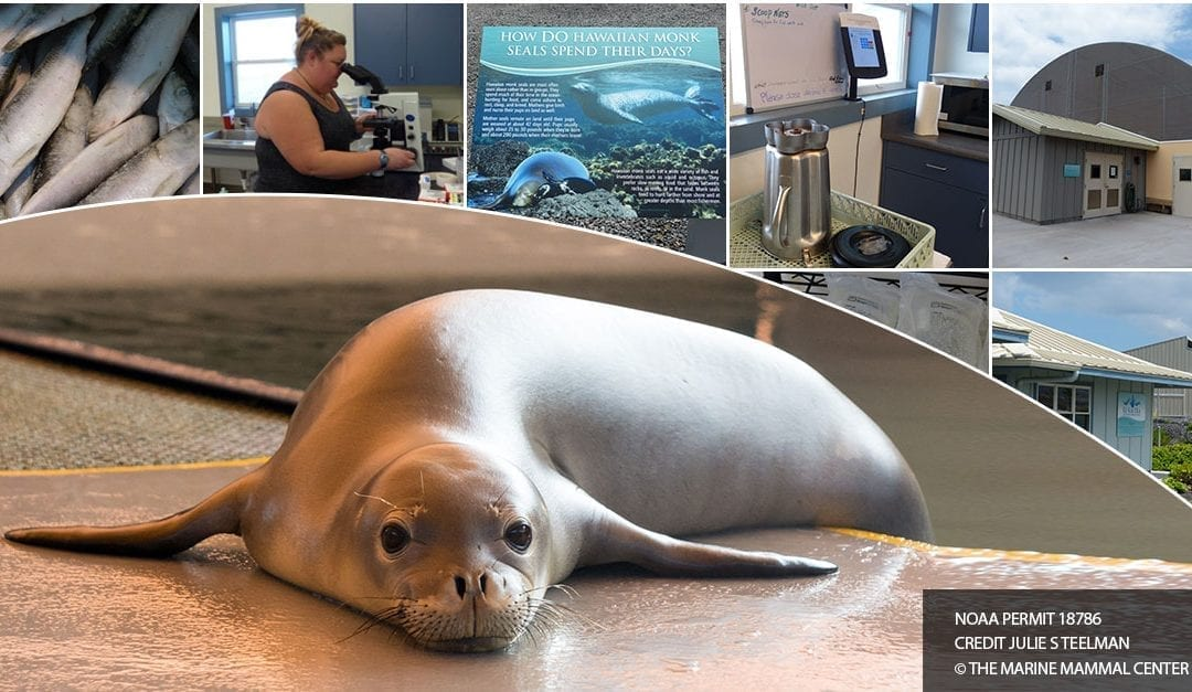 The Hawaiian Monk Seal Hospital – Kona's Ke Kai Ola