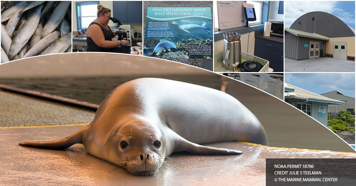 Hawaiian Monk Seal Hospital