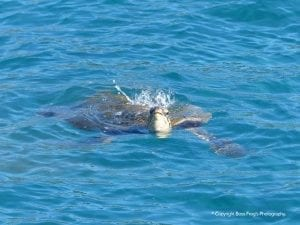 Sea Turtle Snorkel Tales
