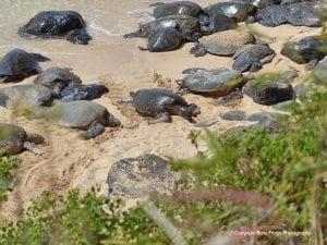 Sea Turtle Snorkel Tales