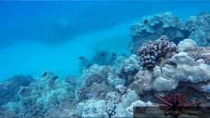 Crossing and Caring for Coral 2