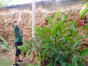 Historic_Lahaina_Plants