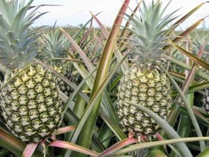 Hawaiian_Pineapples_Ready